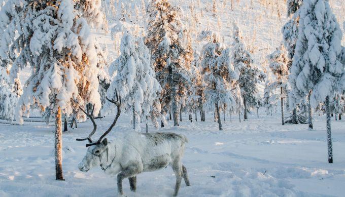 фильм 24 снега скачать торрент - фото 2